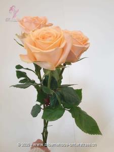 Rosen schenken war nie einfacher. Sie möchten einen Strauss aus puren Rosen ohne Grün? Stellen Sie jetzt hier Ihren individuellen Rosenstrauss zusammen. Wählen Sie zwischen einer und 100 Rosen. Die Freude wird, so oder so, riesig sein.
