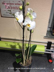 Mit dieser stilvollen Orchidee haben Sie ein Geschenk, welches begeistert und lange an Sie denken lässt.    Ob Geburtstagswünsche, Dankeschön, ich liebe dich oder einfach so, dieses Blumengeschenk passt zu jedem Anlass.     Das Bild entspricht der mittleren Preisvariante.