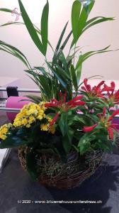 Wer den Garten am liebsten ins Wohnzimmer nehmen würde, für den haben wir die perfekte Lösung, in Form dieses Pflanzenkörbchens.