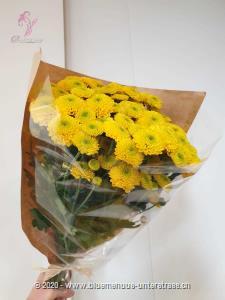 Chrysanthemen, die Glücksbringer aus Asien, ziehen die Welt schon lange in ihren Bann. Im Herbst sind diese farbenfrohen Blumen bei uns nicht mehr wegzudenken. Stiele: 10 Stk.