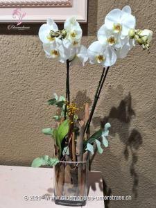 Modern und trotzdem natürlich, diese zauberhafte Vasenfüllung fängt die Schönheit des Winters ein und ist ein Blickfang in jedem Zuhause.    Dieses Werkstück wird vor Ort individuell und frisch zusammengestellt. Diese Komposition besteht aus einer Orchideenpflanze, die der Abbildung in Form und Farbe möglichst entspricht. Die optimale Gestaltung des Präsents liegt in den kompetenten Händen unserer Partner-Floristen.