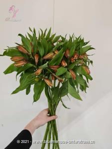 Die leicht duftende Alstroemeria steht für tiefe Freundschaft und Verbundenheit. Überraschen Sie durch Exotik. Stiele: 15 Stk.