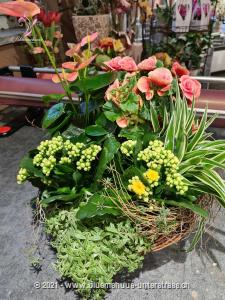 For those of you who would love to bring your garden into the living room, we have the perfect solution: this planted basket.