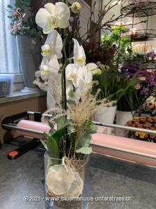 Dieses Werkstück wird vor Ort individuell und frisch zusammengestellt, je nach Erhältlichkeit mit Schnitt-Orchideen oder mit einer Orchideenpflanze, so dass es der Abbildung in Form und Farbe möglichst entspricht. Die optimale Gestaltung des Präsents liegt in den kompetenten Händen unserer Partner-Floristen.    Ob Geburtstagswünsche, Dankeschön, ich liebe dich oder einfach so, dieses Blumengeschenk passt zu jedem Anlass.