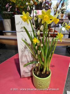 Dieser süsse Blumengruss vom Osterhasen sorgt für Freude und gute Stimmung. Soll der Osterhase auch jemanden für Sie überraschen?