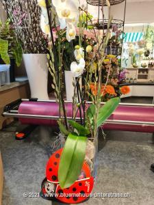 Zu diesem Blumengruss wird eine Packung Schoggi-Glückskäfer von Munz kombiniert. Diese originelle Packung beinhaltet 32 kleine Glückskäfer, 150g feinste schweizer Milchschokolade mit Pralinéfüllung.     Dieses Werkstück wird vor Ort individuell und frisch zusammengestellt, je nach Erhältlichkeit mit Schnitt-Orchideen oder mit einer Orchideenpflanze, so dass es der Abbildung in Form und Farbe möglichst entspricht.Die optimale Gestaltung des Präsents liegt in den kompetenten Händen unserer Partner-Floristen.