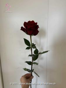 Sie ist der klassische Beginn einer Liebeserklärung, wie es so schön heisst, eine Rose sagt mehr als tausend Worte.    Das Bild zeigt eine langstielige Rose.