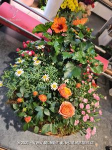 Lassen Sie die schönsten Saisonpflanzen frei Haus überbringen: Mit einem Mini-Garten für draussen wie es auch die Natur nicht schöner gestalten könnte.    Dieser Pflanzenkorb für draussen wird bei guter Pflege lange Freude bereiten.    Das Bild entspricht der mittleren Preisvariante. Das Gefäss kann vom Bild abweichen.